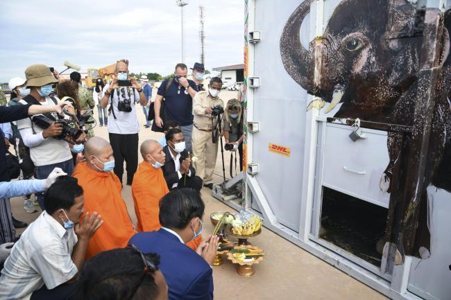 The container holding Kaavan the elephant is blessed by monks