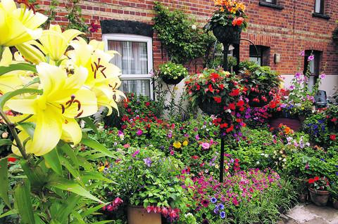 thisisoxfordshire: A beautiful garden from last year's Oxford In Bloom competition belonging to Roy Cox, Mill Street