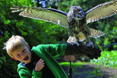 Max Rutterford with Desmond the owl. Picture:OX53470 Ric Mellis