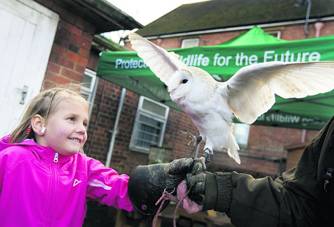 Children have a right hoot with rare birds