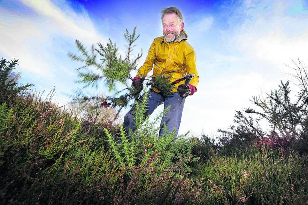 thisisoxfordshire: Volunteer Richard Yates cuts back gorse at Shotover Country Park