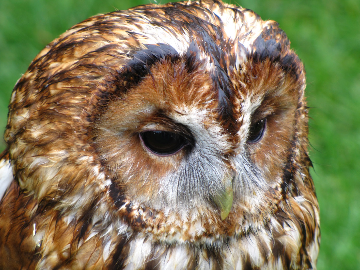 See birds of prey at the wild fair