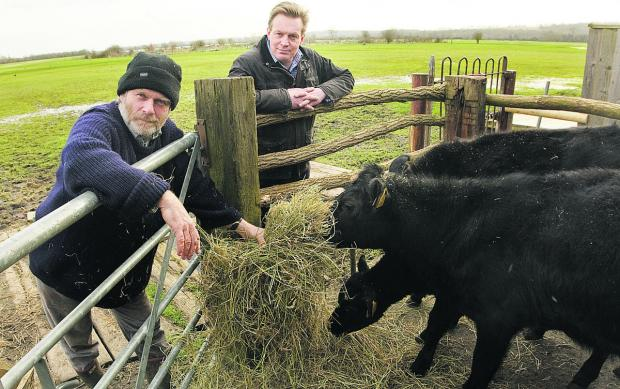 Wolvercote commoners Michael Buck and Jonathan Gittos with calves that will graze on Port Meadow