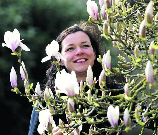 Ness Newman checks a magnolia tree, planted at the Botanic Garden in 1920