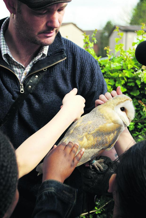 thisisoxfordshire: Glen Easton with Willow the barn owl