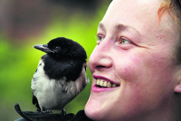 thisisoxfordshire: Lottie Pauling with the magpie