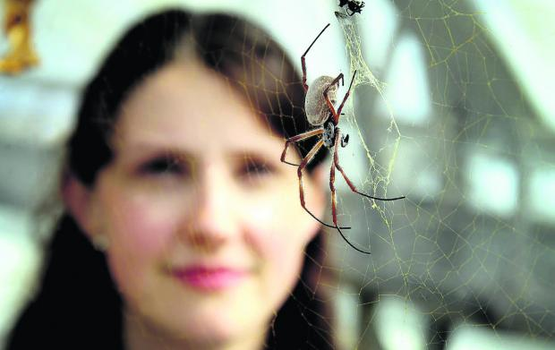 thisisoxfordshire: Beth Mortimer  with the Golden Orb spider