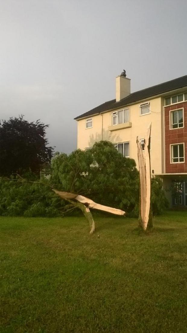 thisisoxfordshire: This tree was ripped apart in this afternoon's storm. From reader @Middle_May