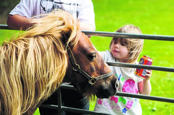 Two-year-old Ella Moss meets a Shetland pony at the play day