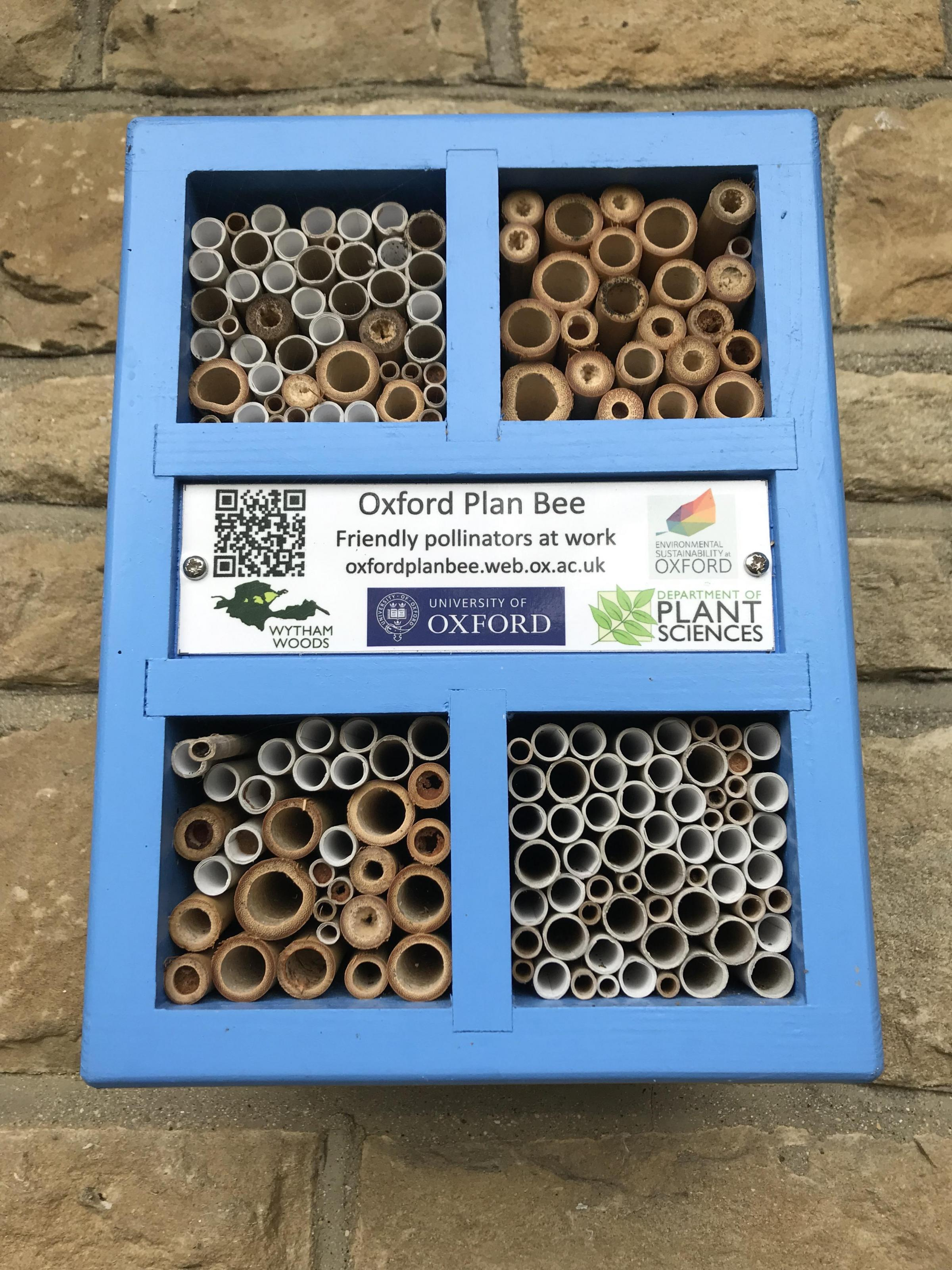 Solitary Bee Nestbox Walk (Oxford City)